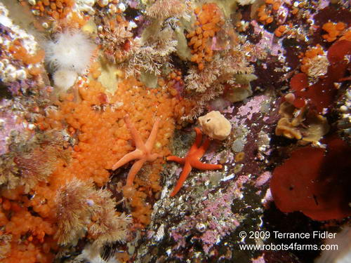 Blood Starfish, Hideaway Island, Browning Passage, Port Hardy