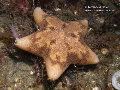 Cushion Star