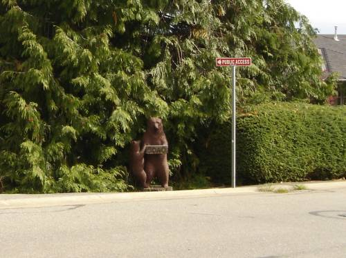 Bear at entrance to Rocky Point